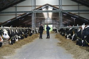 Excellent results at Bles Dairies Farm