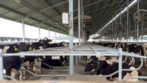 Farm Management Project in China